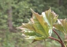 Mödling pflanzt einen Klimawald